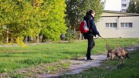 Junge Frau, die mit Hund im Park geht stock video footage