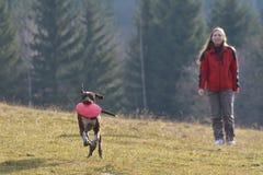 Junge Frau, die mit ihrem Deutsch Kurzhaar spielt lizenzfreies stockbild