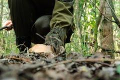 Junge Frau, die Natur im sonnigen Wald sammelt Pilze genießt Lizenzfreies Stockfoto