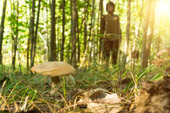 Junge Frau, die Natur im sonnigen Wald sammelt Pilze genießt stockbilder