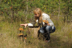Junge Frau, die Pilze im Wald erfasst Lizenzfreies Stockfoto