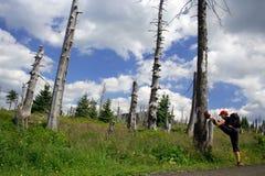 Junge Frau, die während des Wanderns ausdehnt Lizenzfreie Stockbilder