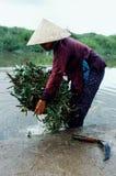 junge Frau, die Windengemüse von einem Fluss in einer traditionellen konischen Hütte erntet stockbild