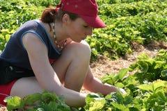 Junge Frau in einer Erdbeere field1 Lizenzfreies Stockfoto