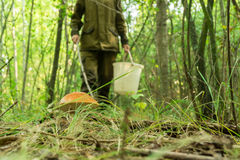 Junge Frau erfasst Pilze am Waldwarmen sonnigen Morgen Stockbilder
