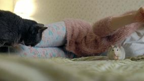 Junge Frau mit einer lustigen Ratte zu Hause, sie spielend und einziehen stock video