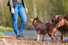 Junge Frau mit zwei Hunden in dem Fluss stockfoto
