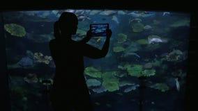 Junge Frau am oceanarium machen Fotos von Fischen stock video footage