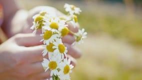 Junge Frau sammelt einen Kranz von Gänseblümchen in der Wiese von Blumen, extrem nah oben stock footage