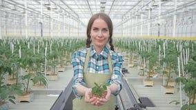 Junge Frau, welche die Grünpflanze steht im Gewächshaus auf Hydroponik hält stock footage
