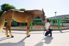 Junge Frau, welche die Nase ihres Pferds küsst Lizenzfreies Stockbild