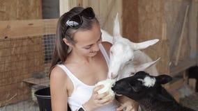 Junge Frauen, die Schafe und Ziege von der Hand einziehen stock footage