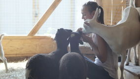 Junge Frauen, die Schafe und Ziege von der Hand einziehen stock video footage