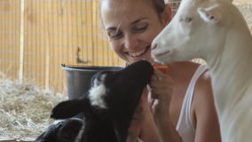 Junge Frauen, die Schafe und Ziege von der Hand einziehen stock video