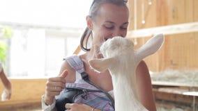 Junge Frauen, die Ziege von der Hand einziehen stock footage