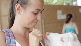 Junge Frauen, die Ziege von der Hand einziehen stock video footage