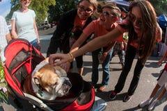 Junge Frauen-froh Haustier-englische Bulldogge, die im Kinderwagen sitzt lizenzfreie stockfotografie