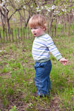 Junge am Garten Stockfoto