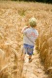 Junge geht auf ein Feld des Roggens Stockfotos