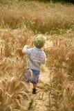 Junge geht auf ein Feld des Roggens Stockfotografie