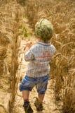 Junge geht auf ein Feld des Roggens Lizenzfreies Stockfoto