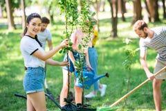 junge glückliche Freunde, die neue Bäume pflanzen stockfoto