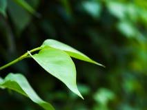 Junge Grünblätter Stockbild
