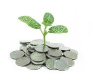 Junge Grünpflanze Lizenzfreie Stockfotos