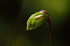 Junge Grünpflanze Stockfotos