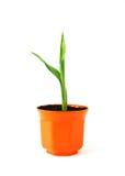 Junge Grünpflanze im orange Potenziometer Lizenzfreie Stockfotografie