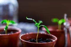 Junge Grünpflanze mit Wassertropfen Stockbilder
