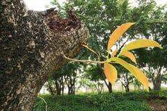 Junge Grünpflanzen Lizenzfreies Stockfoto