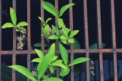 Junge Grünpflanzen Stockfotos