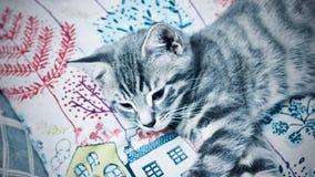 Junge graue Katze lizenzfreie stockfotos