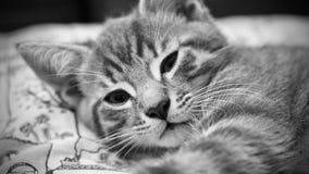 Junge graue Katze stockfoto
