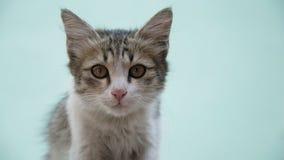 Junge graue Katze auf blassem em-grün Hintergrund Stockbilder
