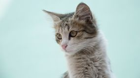 Junge graue Katze, die linksseitig sitzt und schaut Stockfotografie