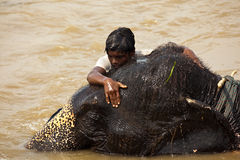 Junge hält fest zum Kopf des Elefanten im Fluss an Stockfotografie