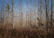 Junge HerbstBäume des Waldes Lizenzfreies Stockfoto