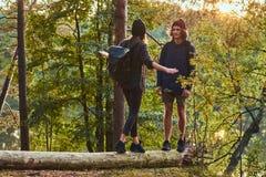 Junge Hippie-Paare, die Spaß bei der Stellung auf einem Baumstamm in einem schönen Wald bei Sonnenuntergang haben Reise und Wande lizenzfreie stockfotografie