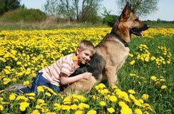 Junge, Hund und gelbe Wiese. Stockfoto
