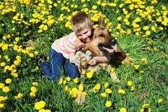 Junge, Hund und gelbe Wiese. Lizenzfreie Stockbilder