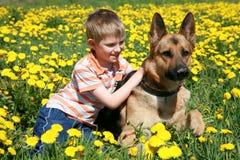Junge, Hund und gelbe Wiese. Stockbilder