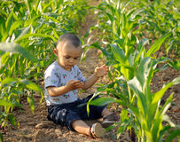 Junge im Getreidefeld stockfotos