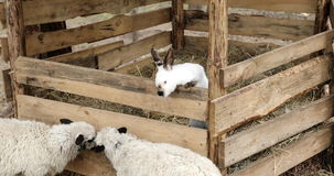 Junge Kaninchen, die in einem Kaninchenstall sitzen stock footage