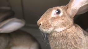 Junge Kaninchen in einem Hutch stock video footage