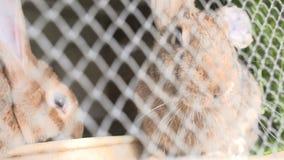 Junge Kaninchen in einem Hutch stock footage