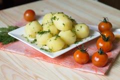 Junge Kartoffel Lizenzfreie Stockbilder