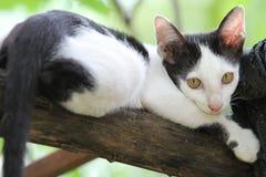 Junge Katze Stockbild