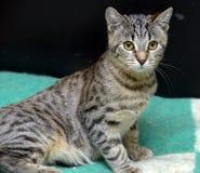 Junge Katze der getigerten Katze Stockbilder